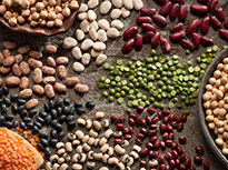 Various groups of different types of pulses