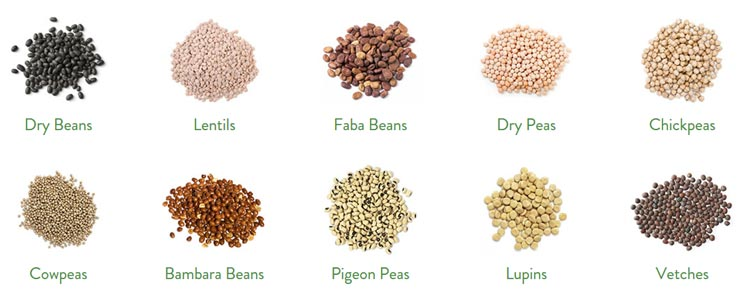 10 common types of pulses: Dry Beans, Lentils, Faba Beans, Dry Peas, Chickpeas, Bambara Beans, Pigeon Peas, Lupins and Vetches