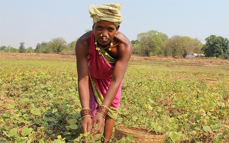 Urmila Pujari farming in India