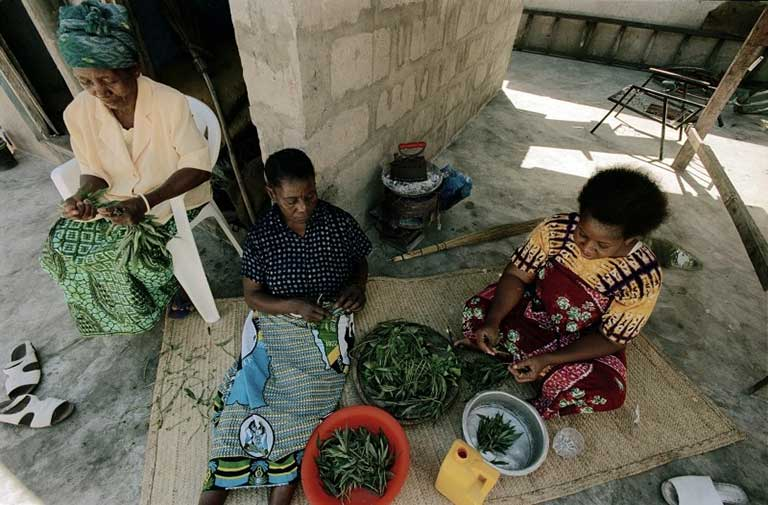 3 women (2 sitting on the ground) in a low-income country sorting legumes into bowls